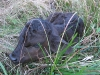 New calf born at White Rabbit Acres