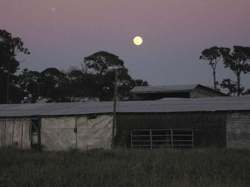 Full Moon Rising Over Vero Beach Farm
