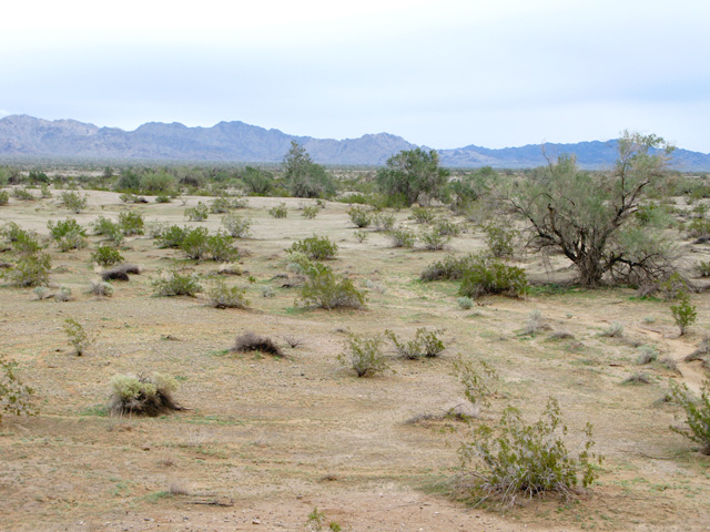 Niland Desert near Slab City