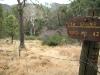 Portal Arizona Ash Spring Hike