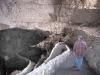 Natural Entrance to Carlsbad Caverns