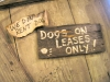 Dogs on lease, Luckenbach Saloon