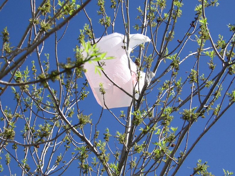 Plastic grocery bags stuck in tree