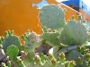 May Day Cactus Blooms at Riverbend Hot Springs