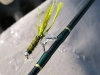 Frozen Fly Fishing Rod eyelets on Arkansas River at Hecla Junction