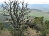 Tree awaiting spring over valley near Black Canyon National Park