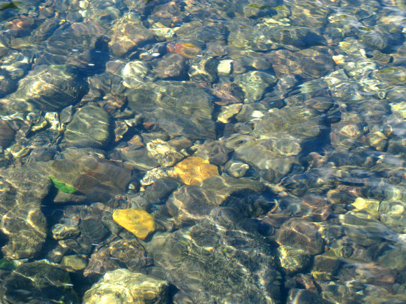 no fish in lake fork of the gunnison river