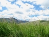 Hay blows in the Colorado wind at Vickers ranch