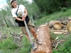 Rene the Lumberjane on Felled Ponderosa Pine