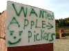 Apple pickers wanted Methow Valley WA