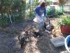 Feeding the outside cats