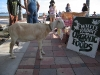 17. Fanny the Goat at Fort Pierce Market