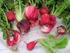 Organic radishes aint pretty but they taste good.