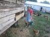 12. Collecting Hormone Free Eggs at White Rabbit Acres