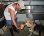 19. Dogs like Jerry love organic beef heart.