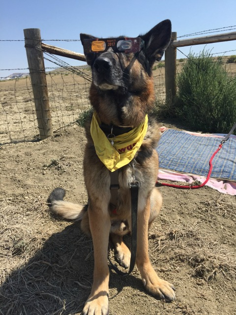 2017 Wyoming Eclipse Madness Tripawd