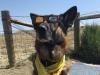 2017 Wyoming Eclipse Madness Tripawd