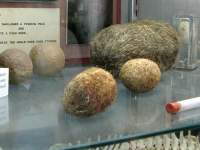 Largest Hairball Collection Veterinary Museum Columbia, CO