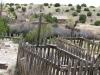Ranch de los Golondrinas Grave Plots, New Mexico