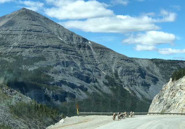 Stone Mountain Summit