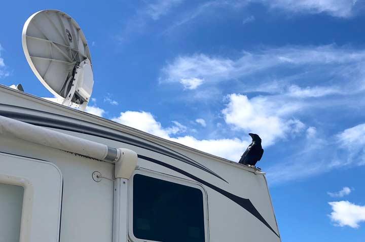 Raven and Satellite Internet