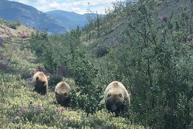 best wildlife pics on the Alaska Highway