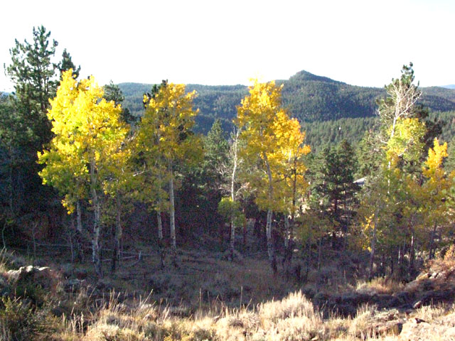 Crystal Lakes Colorado Aspen Fall Colors