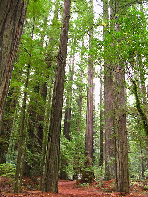 Redwood State Parks California North Coast