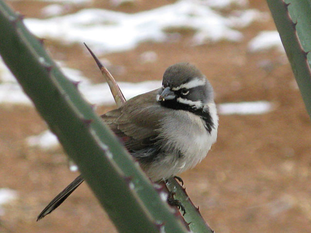 Elfrida Arizona Ranch Wild Bird