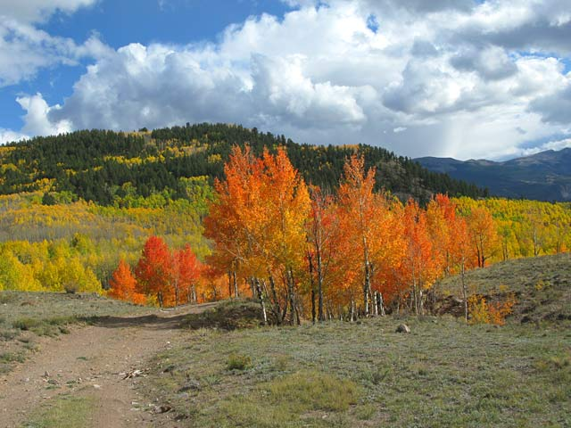 Vickers Upper Ranch Colorado Aspen Colors