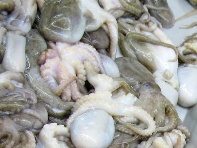 Baby Octopus at H Mart Asian Market  Los Angeles