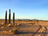 Quartzsite Arizona Cactus Sunrise