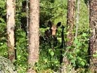 Creedmore Lakes Hike Moose