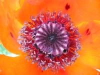 Vickers Summer Flower Garden Detail