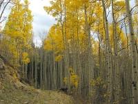 Vickers Upper Ranch Colorado Aspen Colors