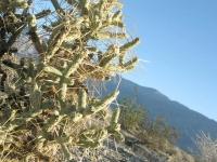 Anza Borrego Desert State Park Cactus