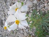Black Gap WMA Texas Spring Wildflowers