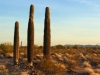 Quartzsite Arizona Cactus Sunrise