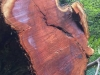 Eureka Redwood