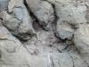Flatbed Pool Dinosaur Tracks, Tumbler Ridge BC