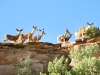 Deer Along Ridge of Capitol Reef Fremont River Trail