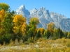 Fall colors and the Grand Tetons