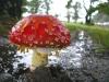 Winchester Bay Oregon magic mushroom