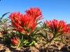 Dewey Utah Wildflower