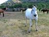 Vickers Ranch Trail Horses Lake City Colorado