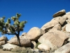 Cap Rock, Joshua Tree National Monument