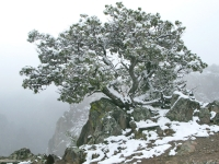 Frozen Tree of Knowledge Over  Black Canyon National Forest