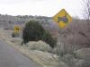 Beware of Tractors and Cows Near Cochiti Lake, NM
