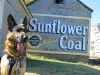 Old Sunflower Coal Sign and Wyatt, Texas Dog