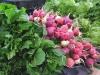 Fresh Veggies at Borrego Springs Farmers Market